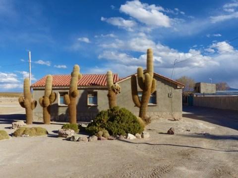 Bolivie Sud Lipez cactus