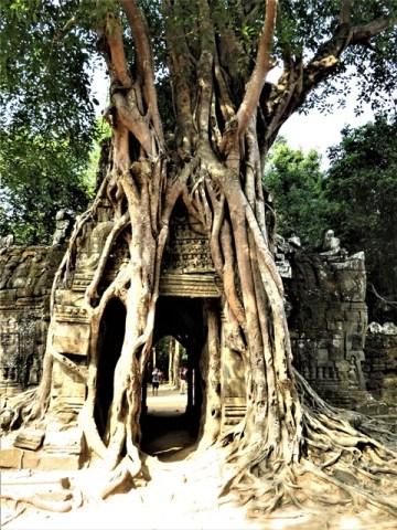 Cambodge Angkor temple Ta Som