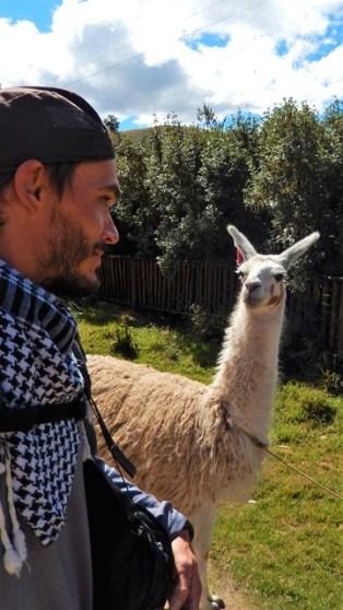 Pérou Vallée Sacrée des Incas lama
