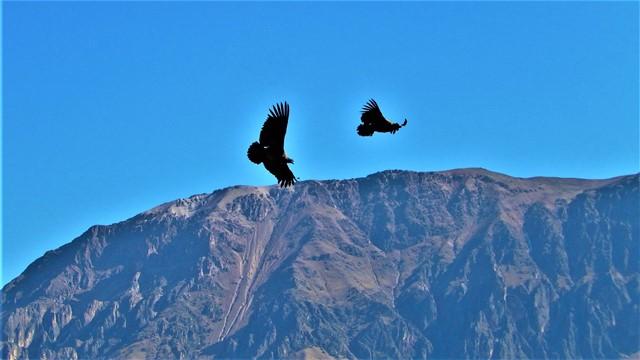 Pérou Cañon del Rio Colca Cruz del Condor