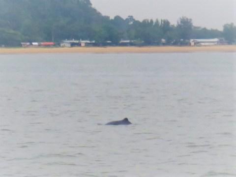 Bornéo Parc Zones Humides dauphins