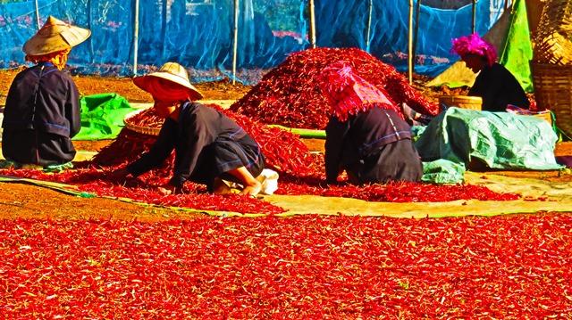 Myanmar Trek Kalaw - Lac Inle piments