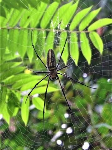 Bali Ubud araignée