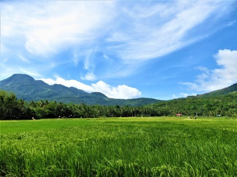Philippines Camiguin rizières