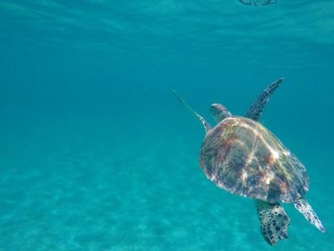 Philippines Port Barton snorkeling tortue