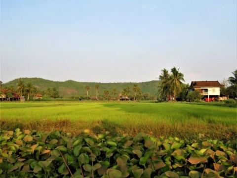 Cambodge Kampot La Plantation Poivre