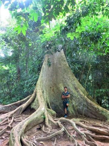 Malaisie Taman Negara arbre