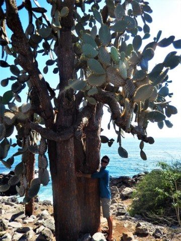 Galapagos ile Santa Fe cactus
