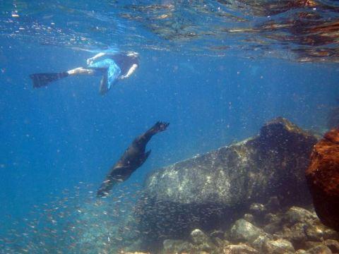 Galapagos ile Santa Fe snorkeling Lion de mer