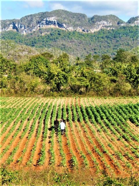 Cuba Vinales valle del silencio