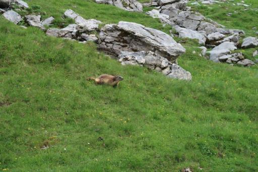 tour fiz marmotte