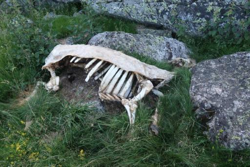 Tour lacs Néouvielle carcasse