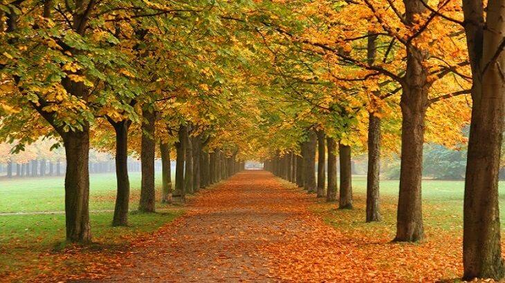 موضوع تعبير عن فصل الخريف بالعناصر