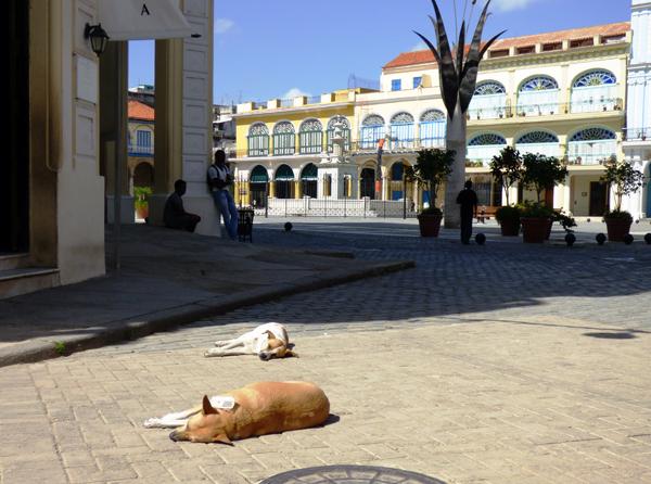 sunbathing dogs near the Plaza Vieja in Old Havana