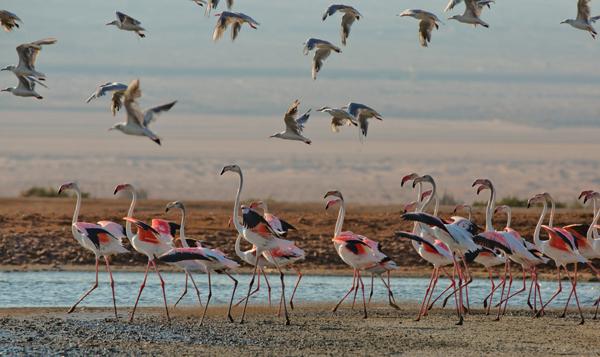 birds at Eilat, photo by Dafna Tal