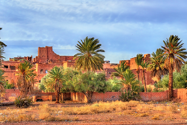 Ouarzazate palm grove