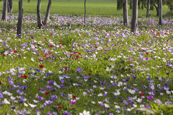 wild flowers in the Galilee, Israel - photo by Itamar Grinberg, courtesy of the Israel Ministry of Tourism