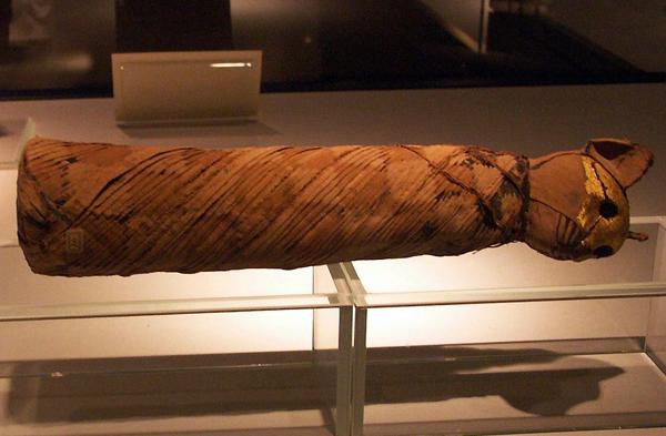 a cat mummy at Luxor's Mummification Museum