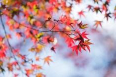 即使同一片樹葉,也可以五彩繽紛。