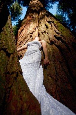 RedwoodNationalForrest