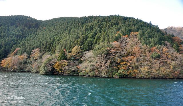 Les forêts autour d'Hakone au mois de novembre - Voyage au Japon, Préfecture de Kanagawa