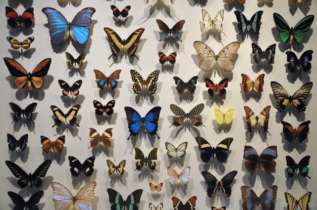 Insectarium de Montréal (5)