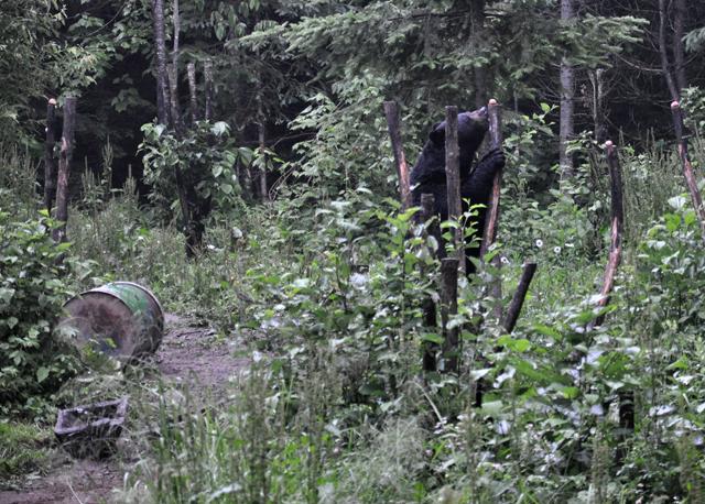 En Mauricie: observation des ours