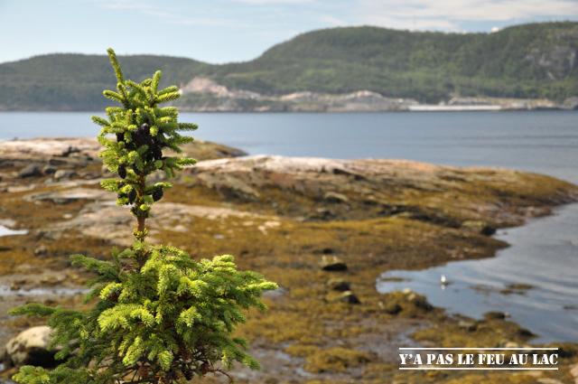 Tadoussac, à la confluence du Saint Laurent et de la Saguenay