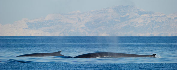 Whale watching en France