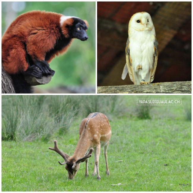 Le parc Sainte-Croix, un zoo près de Nancy à ne pas rater! Avec des animaux d'Europe et plus exotique!