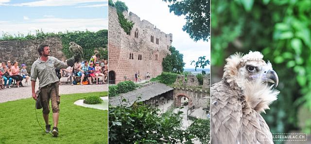 La Volerie des Aigles - Conseils pour un week-end autour de la montagne des singes sur le blog!