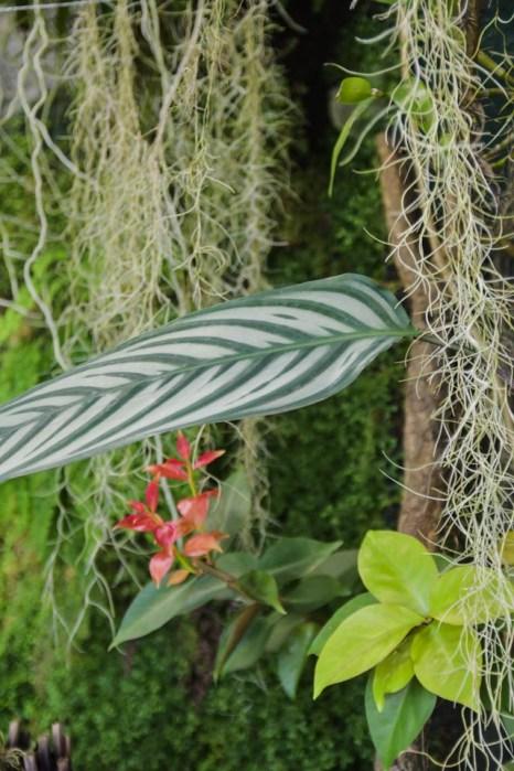 jardin-botanique-tessin-ile-brissago-13