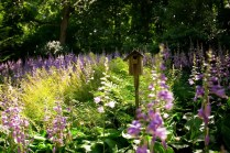 ornamental garden New Milford CT