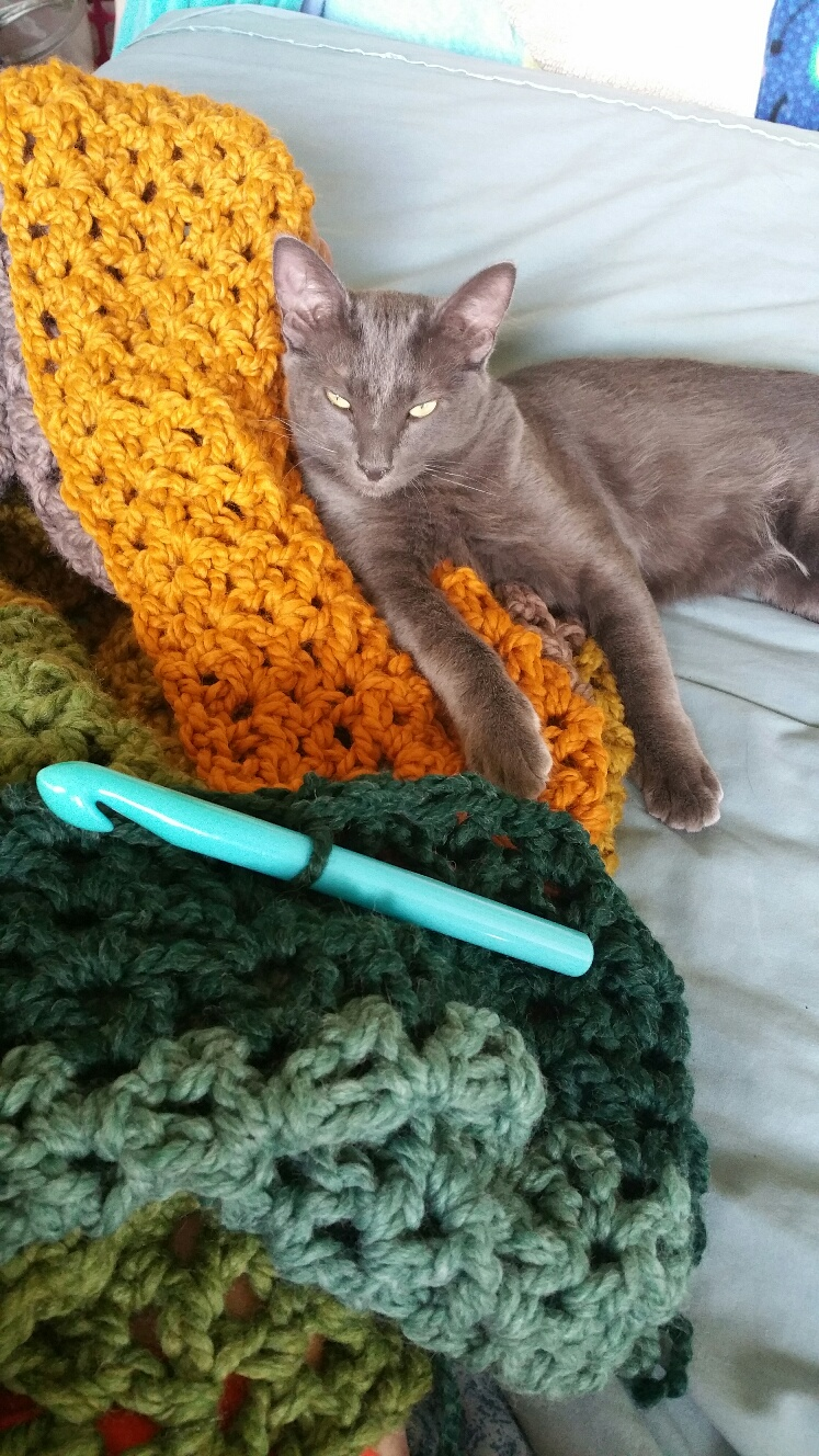 Photo of Gizmo the cat wtih crochet hook and crochet project