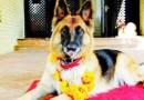 Diwali 2020: दीवाली के अगले दिन नेपाल में होती है कुत्तों की पूजा, जानिए इसकी वजह