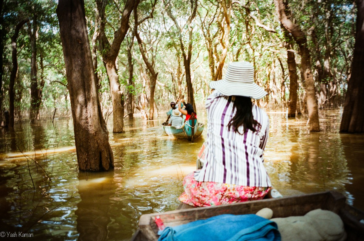Cambodia: The flooded forest in film