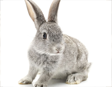 The Bunny Verifies Cruelty Free Products Yasou Skin Care