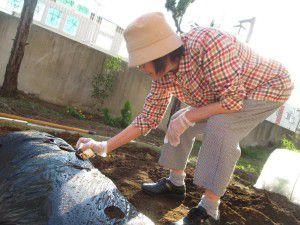 20151007冬野菜を植えています!4