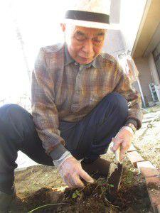 20151015お庭のリニューアル作業がここ数日で一気に進みました6