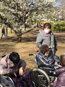 20150311小金井公園へ梅を見に散歩に出掛けました。8