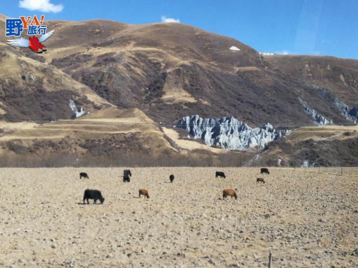 四川甘孜藏族自治區塔公草原 @YA !野旅行-吃喝玩樂全都錄