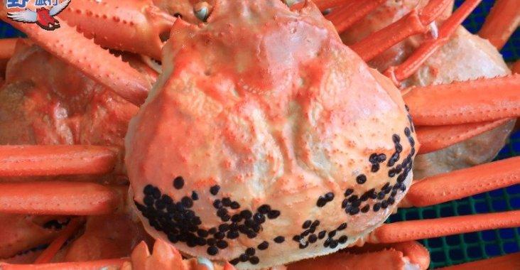 富山灣海鮮饗宴,超人氣的高志紅蟹 @YA !野旅行-玩樂全世界