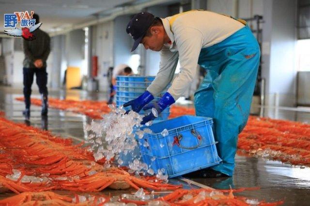 富山灣海鮮饗宴,超人氣的高志紅蟹 @YA !野旅行-吃喝玩樂全都錄