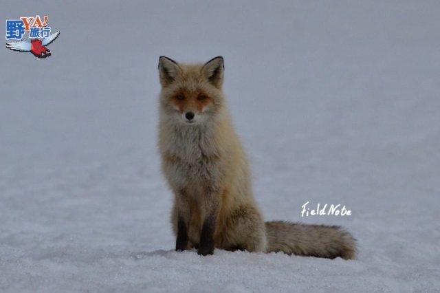 野生動物的的故鄉 釧路溼原蒼茫大地 @YA !野旅行-吃喝玩樂全都錄