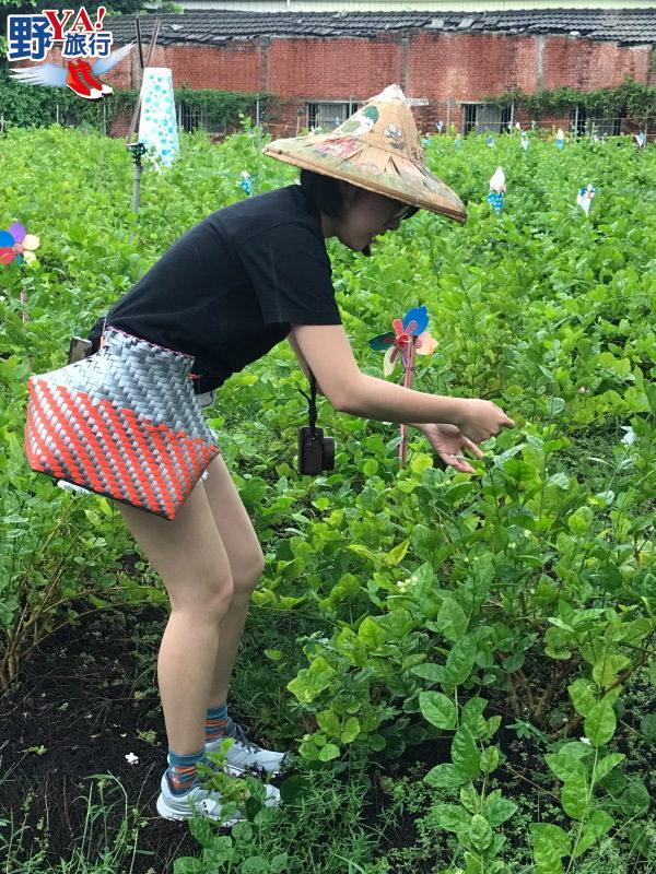 「花現幸福小旅行」滿滿樂趣 今夏花壇玩法更多 @YA !野旅行-吃喝玩樂全都錄