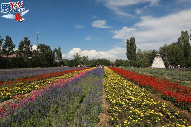 新疆 伊犁 世界薰衣草三大產地之一 新疆伊犁紫色浪漫風情 @YA !野旅行-吃喝玩樂全都錄