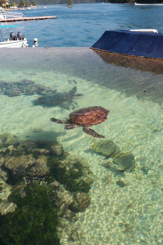 帛琉水母湖重新開放並在台灣首度成立辦事處 @YA !野旅行-吃喝玩樂全都錄