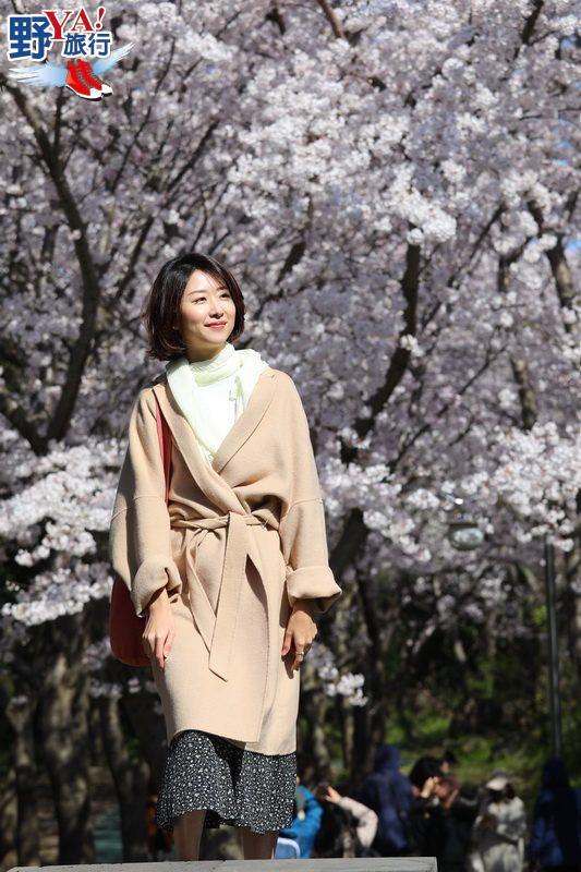 韓國濟州島 放眼所及皆美景 所到之處均浪漫的大櫻花季 @YA !野旅行-吃喝玩樂全都錄