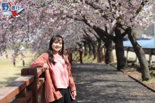 韓國京畿道 秘境賞櫻感受春的氣息 @YA !野旅行-吃喝玩樂全都錄