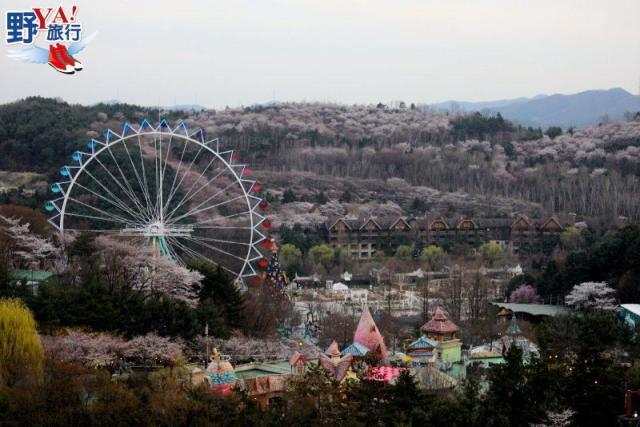 韓國京畿道 春暖花開遊愛寶樂園 寫下更多浪漫回憶 @YA !野旅行-玩樂全世界